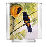 St. Lucia Oriole And Papaya Shower Curtain by Christopher Cox