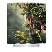 St. Lucia Oriole In Bromeliads Shower Curtain