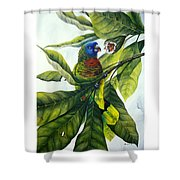 St. Lucia Parrot And Fruit Shower Curtain