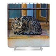 St Paul Cat Shower Curtain
