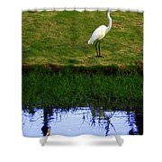 St Thomas Great Egret At The Lake Shower Curtain