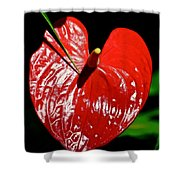 A Point To Your Heart Shower Curtain