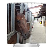 Stable-izer Shower Curtain