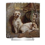 Stablemates Shower Curtain by John Fitz Marshall