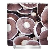 Stacked Mushrooms Shower Curtain