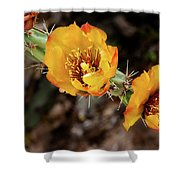 Staghorn Cactus Blossons Shower Curtain