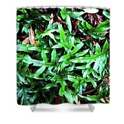 Staghorn Fern With Dead Leaves Shower Curtain