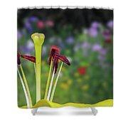 Stamen Shower Curtain