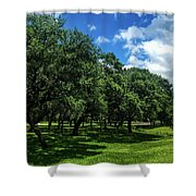 Stand Of Oaks Shower Curtain