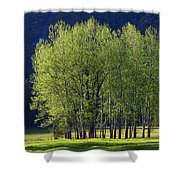 Stand Of Trees Yosemite Valley Shower Curtain