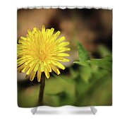 Stand Out - Dandelion Shower Curtain