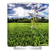 Standing Above The Crop Shower Curtain