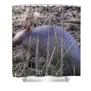 Standing Armadillo Shower Curtain