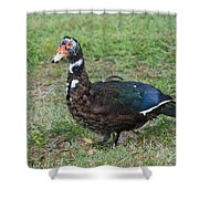Standing Duck Shower Curtain