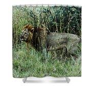 Standing Lion Shower Curtain