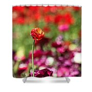 Standing Out Above The Crowd Shower Curtain