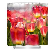 Standing Out In The Crowd Shower Curtain
