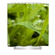 Standstill Drop Shower Curtain