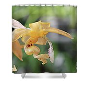 Stanhopea Orchid Shower Curtain