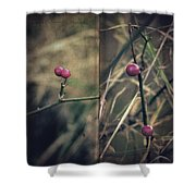 Stanza Shower Curtain