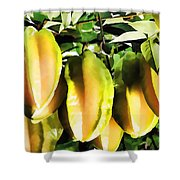 Star Apple Fruit On Tree Shower Curtain