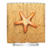 Star Fish Shower Curtain by Katherine Young-Beck