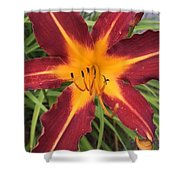 Star Flower Shower Curtain