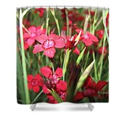 Star Flowers   Shower Curtain