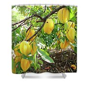Star Fruit Belongs To The Plant Family Shower Curtain