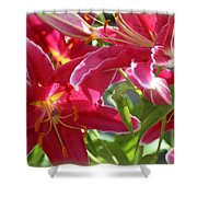 Star Gazer Lilies Shower Curtain