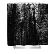 Star In The Forrest Shower Curtain