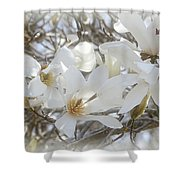 Star Magnolia Blossoms Shower Curtain