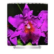 Star Of Bethlehem Orchid 006 Shower Curtain