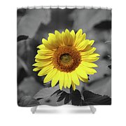 Star Of The Show - Standing Out Shower Curtain