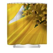 Star Tails Shower Curtain