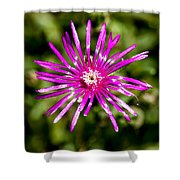 Starburst Of The Wildflowers Shower Curtain