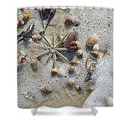 Starfish And Sea Shells Shower Curtain