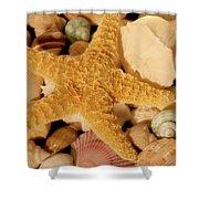 Starfish And Seashells Shower Curtain