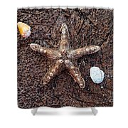Starfish And Seashells Shower Curtain
