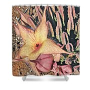 Starfish Cactus Shower Curtain