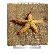 Starfish Shower Curtain by Mamie Thornbrue