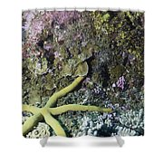 Starfish On A Coral Reef Shower Curtain