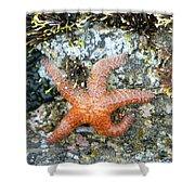 Starfish Running Shower Curtain