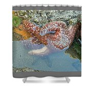 Starfish Sandwhich Shower Curtain