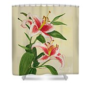 Stargazer Lilies - Watercolor Shower Curtain