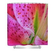 Stargazer Lily Close Up Shower Curtain