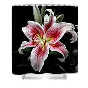 Stargazer On Black 11x14 Shower Curtain
