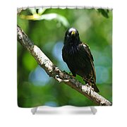 Starlet Shower Curtain