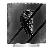 Darling Starling 2 Bnw Shower Curtain
