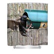 Starling On Bird Feeder Shower Curtain
